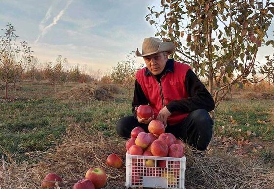Человек с яблоками