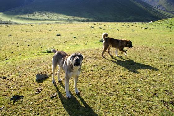 Породы больших собак с названием и описанием