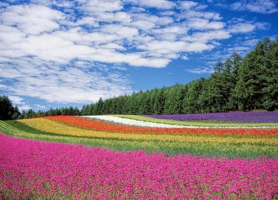 Сотни тысяч цветов высажены в Усть-Каменогорске