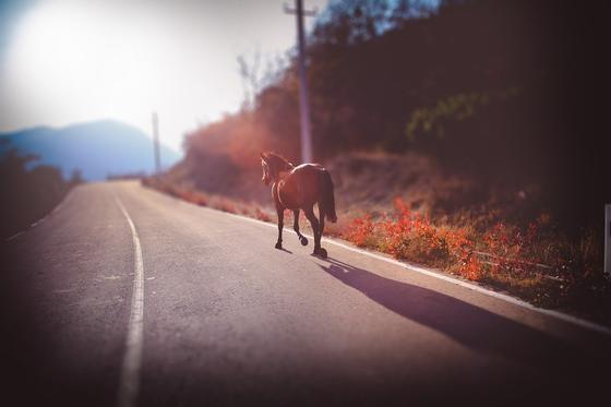 Табун лошадей сбили на трассе в Павлодарской области (видео)