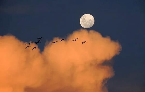 Какой сегодня лунный день 14 июля: общая характеристика