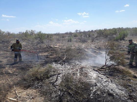 Два крупных пожара разгорелись в Жамбылской области (фото, видео)