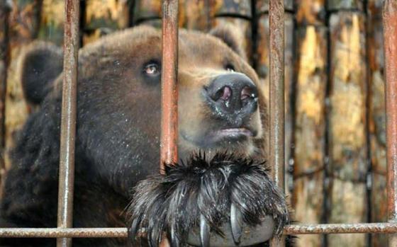 Медведя держали в клетке на рынке в Туркестанской области
