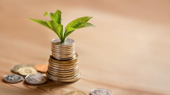 Стопка монет, из которой прорастают зеленые листья