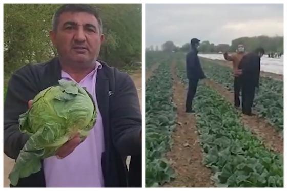 """""""Мы обнищаем"""": Минсельхоз ответил фермерам, пожаловавшимся на запрет экспорта капусты"""