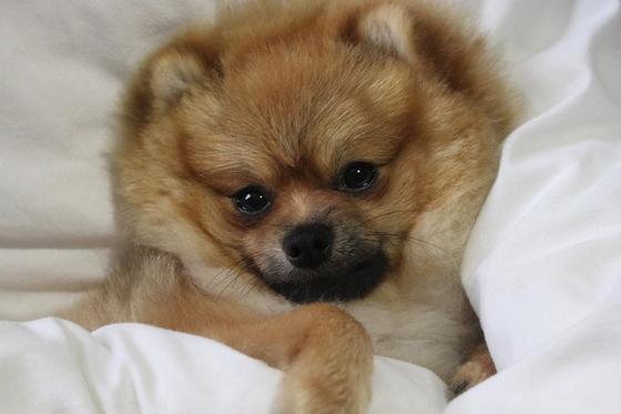 Породы собак для квартиры с названием и описанием
