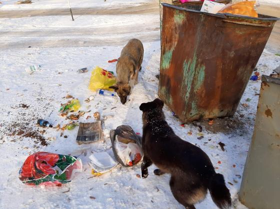 Новый способ решения проблемы с бродячими собаками придумали в Уральске