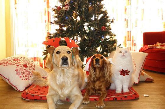 Собаки и кот под елкой