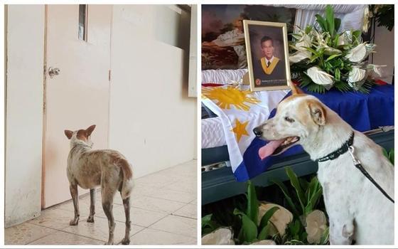 Пес две недели ждал друга-учителя у входа в класс, пока не состоялись похороны (фото)
