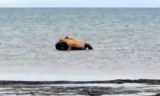 Мертвый верблюд на Каспии