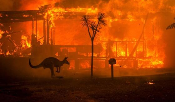Около 500 млн животных погибло в лесных пожарах Австралии