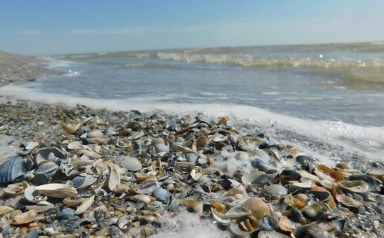 Мертвых моллюсков обнаружили на берегу Урала