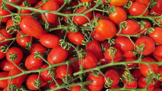 Много красных овальных помидоров черри на плодоножках