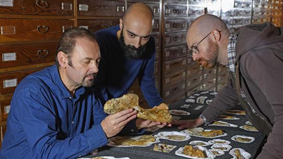 """Останки """"прадеда"""" тираннозавров нашли в Италии (фото)"""