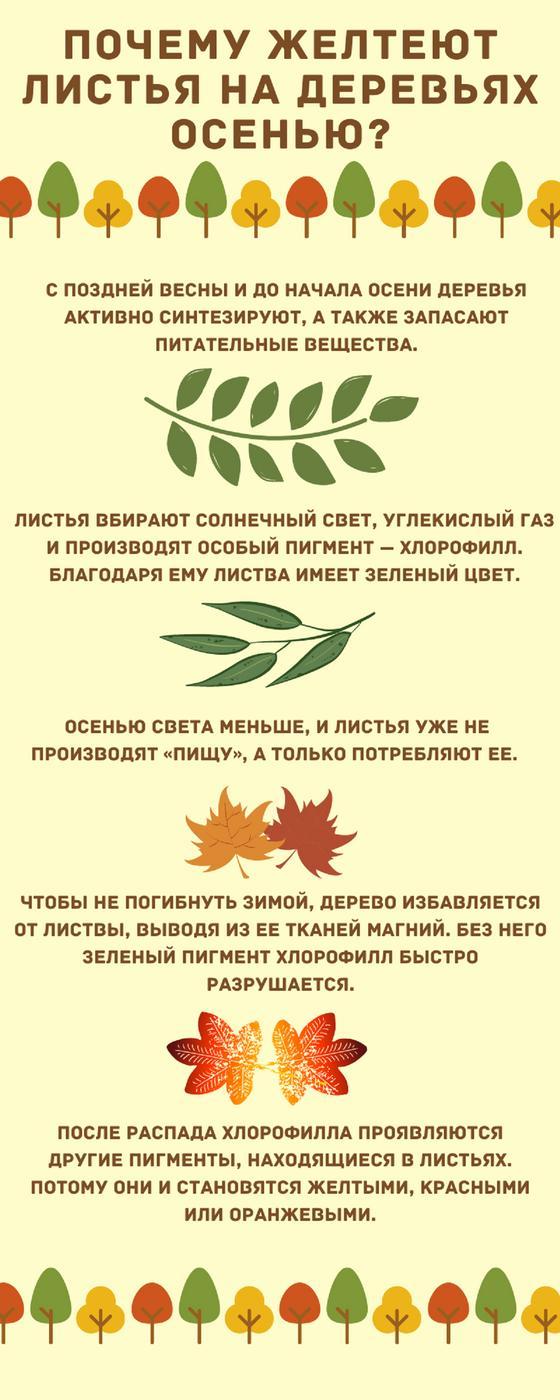 Инфографика рассказывающая, из-за чего желтеют листья