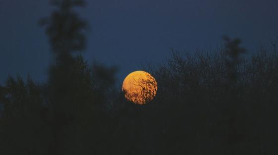 Круглая желтая луна поднимается на небе
