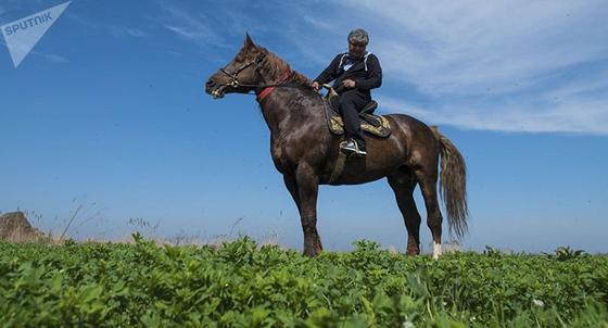 Толпы горевали: умер самый большой конь в Азии, оцененный в 1 млн долларов