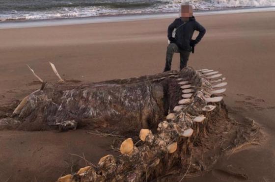 Шотландияда дауыл болып, теңіз жағалауында алып қаңқа пайда болды (фото)