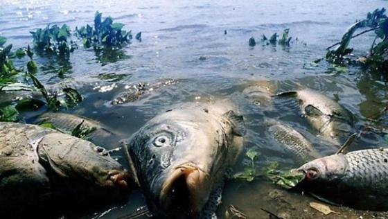 63 тонны погибшей рыбы выловили в реке в Атырау