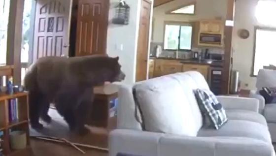 Медведь выломал дверь и зашел в дом в поисках пищи
