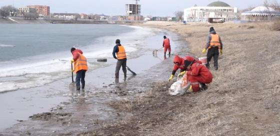 Полтонны дохлой рыбы вновь выловили в Атырау