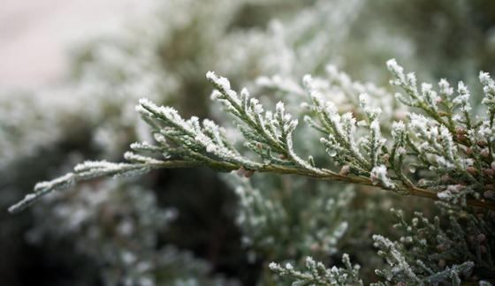Штормовое предупреждение объявили в нескольких регионах Казахстана из-за заморозков
