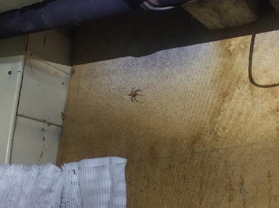 На нашествие ядовитых пауков пожаловались жители ВКО