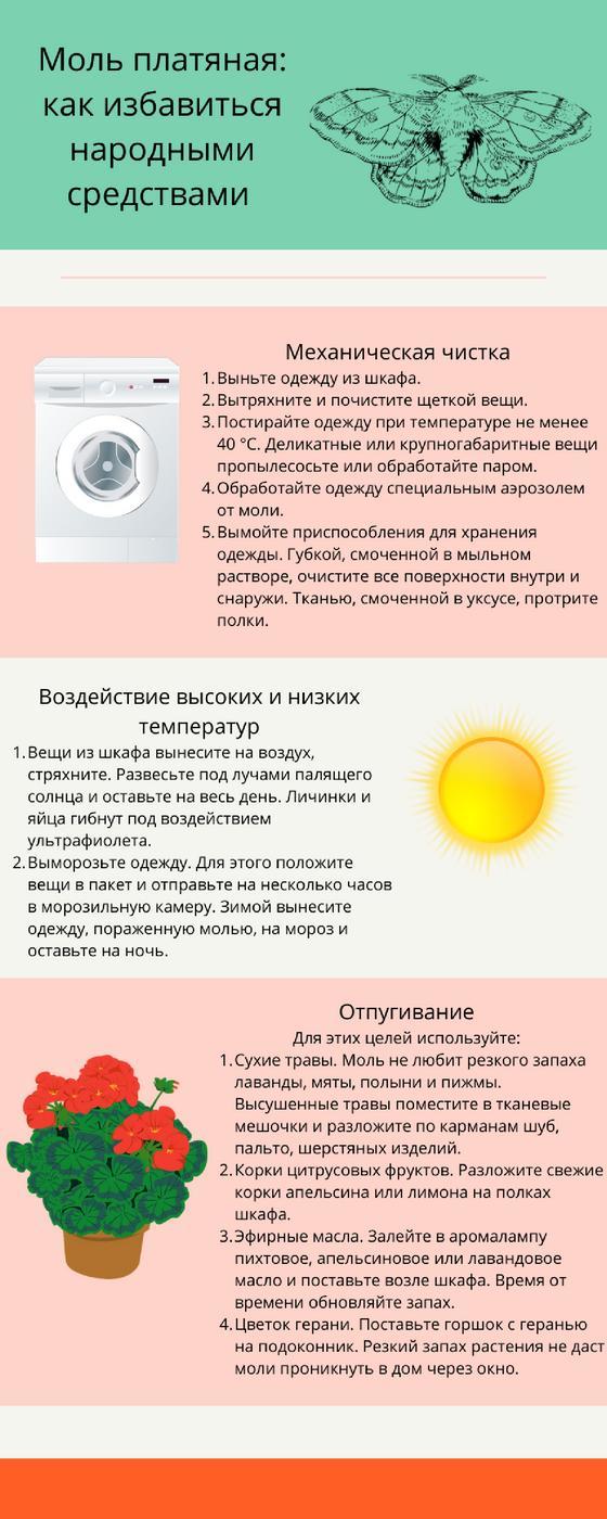 Инфографика: как избавиться от моли народными методами