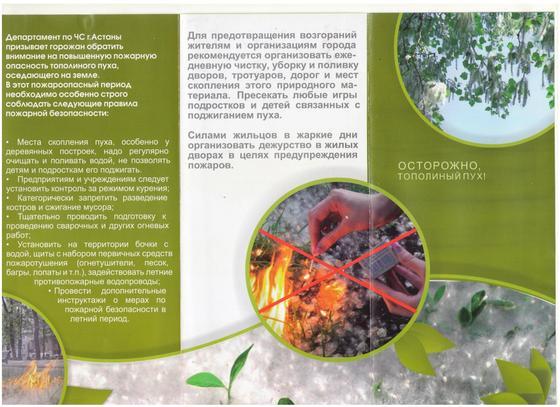 Астанчан предупредили об опасности тополиного пуха