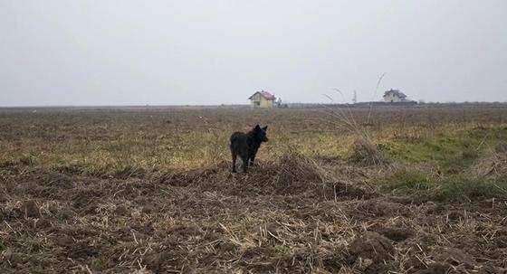 Павлодарца нашли мертвым на поле спустя месяц поисков