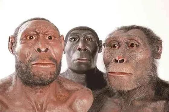 ближайшие предки человека