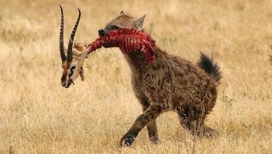 Без шансов, или шокирующая жестокость природы