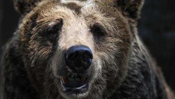 Мужчина напал на медведя, чтобы спасти своего щенка