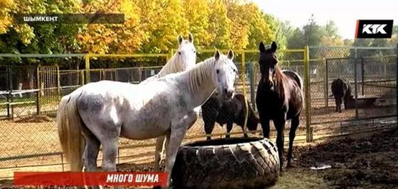 Бывшие сотрудники шымкентского зоопарка заявили о массовой гибели животных