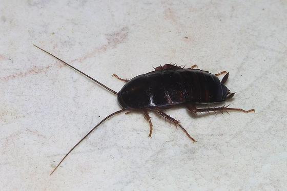 Врачи достали из головы девочки живого таракана