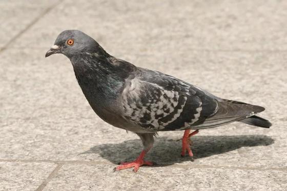 Россиянину дали пять месяцев за убийство голубя на глазах у детей