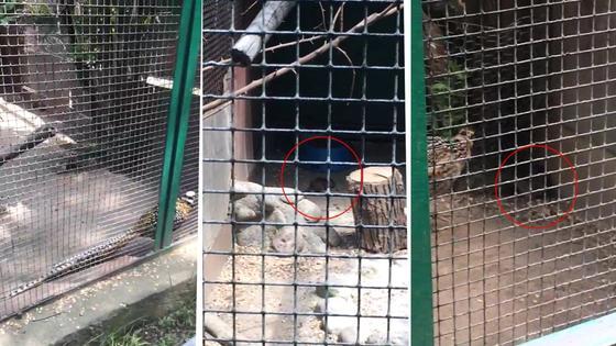 Сотрудники зоопарка травят крыс по 4 раза в месяц