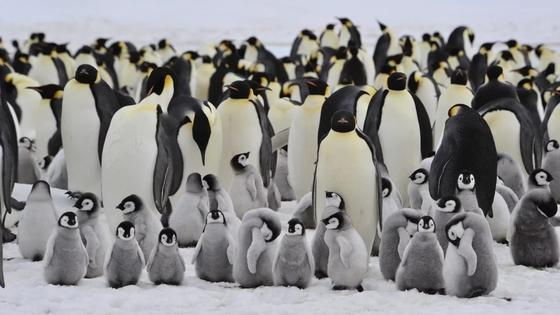 Ученые обнаружили страну пингвинов (видео)