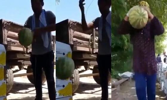 Небьющийся арбуз появился в Узбекистане (видео)