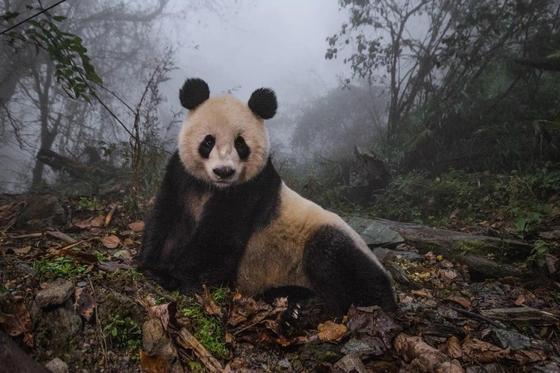 Лучшие кадры живой природы от National Geographic