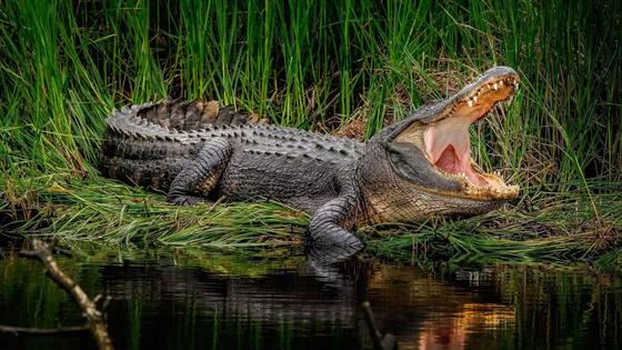 Крокодил съел священника во время крещения