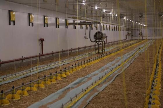 В Акмолинской области открылась крупнейшая птицефабрика в Центральной Азии