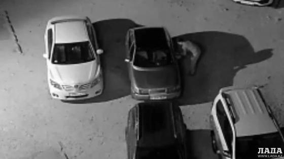 Справился за 20 секунд: вскрытие автомобилей попало на видео в Актау