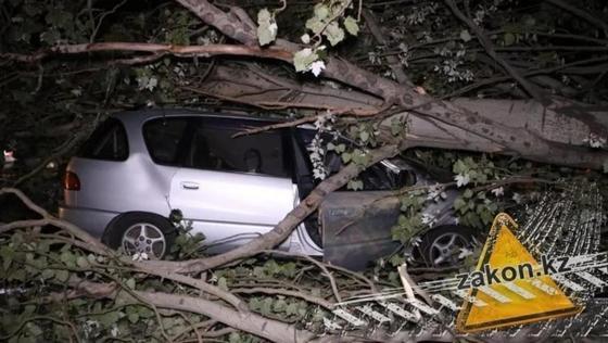 Упавшее на машину дерево в Алматы чуть не убило ее водителя (фото)