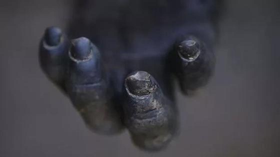 Что стало причиной кровавой четырехлетней войны среди шимпанзе? Разбираются ученые