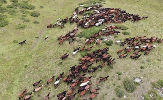 Конный пробег на высоте 2500 метров состоялся в Алакольском районе