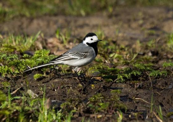 Какие птицы прилетают весной в Казахстан