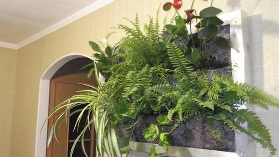 Картина из растений на стене