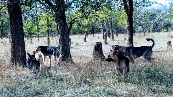 Бродячие собаки бегают в пригороде Уральска