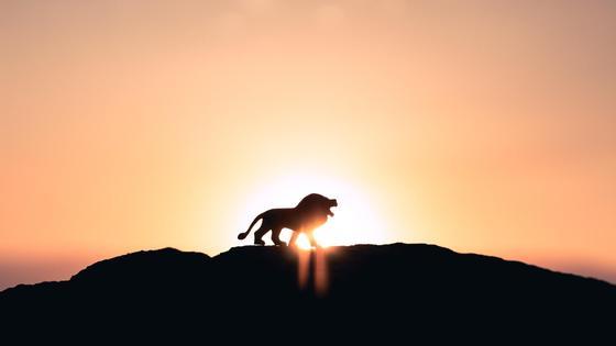 Лев на горе напротив заходящего солнца